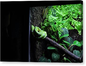 Snake - National Aquarium In Baltimore Md - 12124 Canvas Print by DC Photographer
