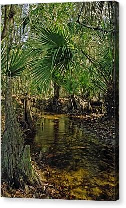 Snell Creek. Osceola County Florida Canvas Print by Chris  Kusik