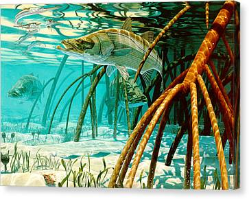 Snook In The Mangroves Canvas Print by Don  Ray