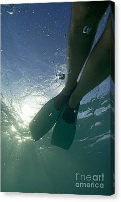 Snorkeller Legs With Flippers Underwater Canvas Print by Sami Sarkis