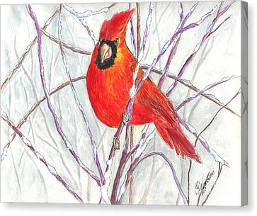 Snow Cardinal Canvas Print by Carol Wisniewski