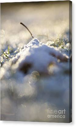 Snow Cover Canvas Print by Sue OConnor