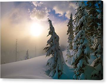 Snow-covered Pine Trees, Sunrise Canvas Print by Panoramic Images