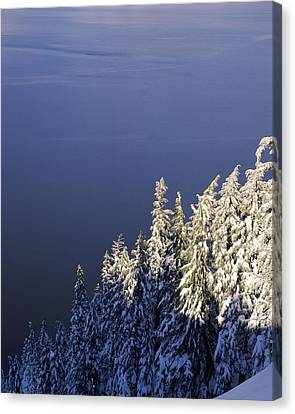 Snow Covered Trees At South Rim, Crater Canvas Print by Panoramic Images
