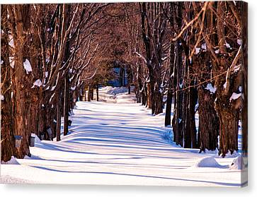 Snow Covered Way Canvas Print by Lee Costa