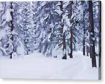 Snow-dappled Woods Canvas Print by Don Schwartz