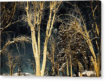 Snow Dark Canvas Print by Gloria Pasko