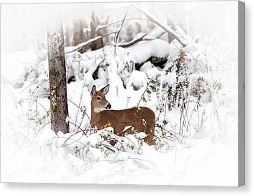 Snow Doe Canvas Print by Karol Livote
