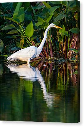 Snow Egret And Its Reflection Canvas Print by Andres Leon