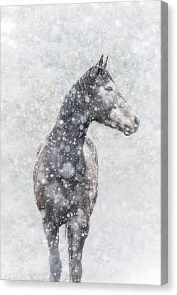 Snow Flurry Canvas Print by Pamela Hagedoorn