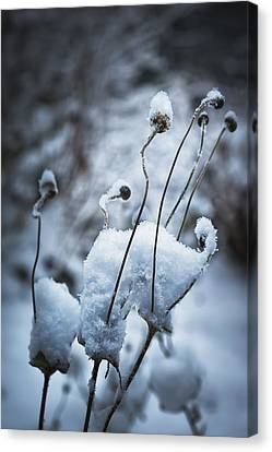 Snow Forms Canvas Print by Belinda Greb
