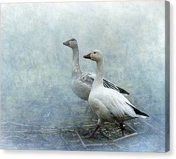 Snow Geese Canvas Print by Angie Vogel