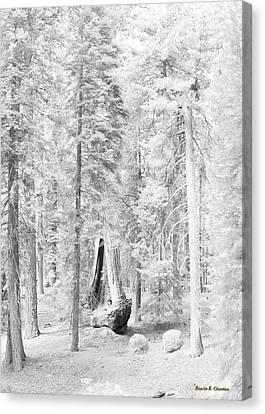 Snow Impressions Canvas Print by Angela Stanton