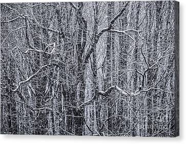 Snow In The Forest Canvas Print by Diane Diederich