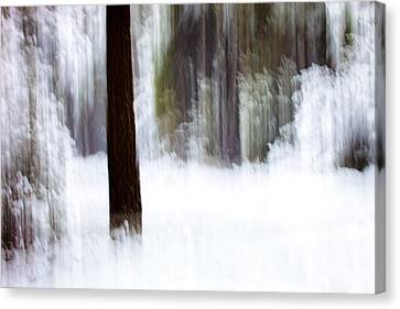 Snow In The Forest Canvas Print by Marc Garrido