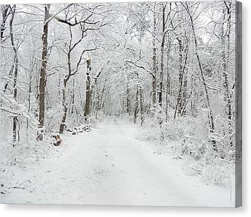 Snow In The Park Canvas Print by Raymond Salani III