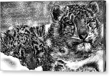 Snow Leopard Canvas Print by Jerry Winick