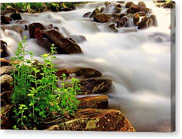 Snow Melt Canvas Print by The Forests Edge Photography - Diane Sandoval