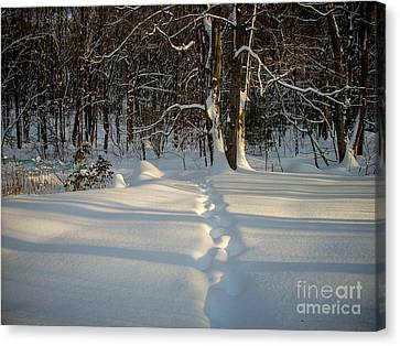 Snow Path Canvas Print by Randi Shenkman