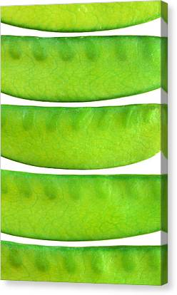 Snow Peas Canvas Print by Jim Hughes