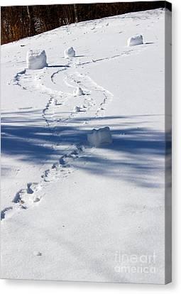 Snow Rollers Canvas Print by Karen Adams