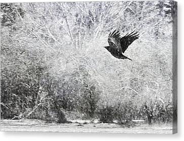 Snow Storm With Crow Canvas Print by Theresa Tahara