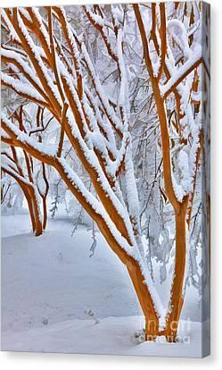Snow Wonderful Snow - Greensboro North Carolina Canvas Print by Dan Carmichael
