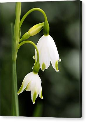 Snowbells In Spring Canvas Print by Rona Black