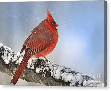 Snowing On Red Cardinal Canvas Print by Nava  Thompson