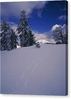 Snowshoe Tracks On Snow, Mt. Scott Canvas Print by Panoramic Images
