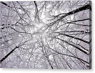 Snowstorm Canvas Print by Benjamin Yeager