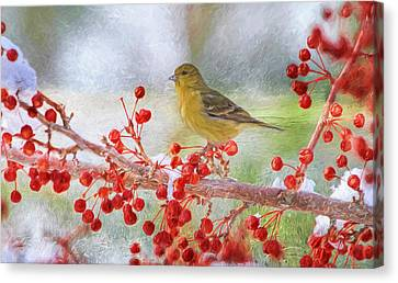 Snowy Beak Canvas Print by Donna Kennedy