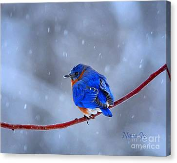 Snowy Bluebird Canvas Print by Nava Thompson