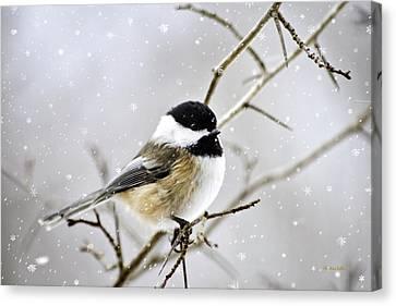 Snowy Chickadee Bird Canvas Print by Christina Rollo