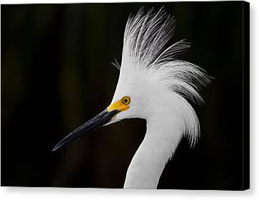 Snowy Egret Crown Canvas Print by Andres Leon