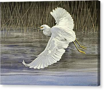 Snowy Egret Canvas Print by Paul Krapf