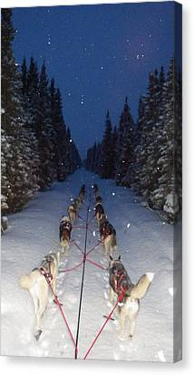 Snowy Night In The Pines Canvas Print by Karen  Ramstead