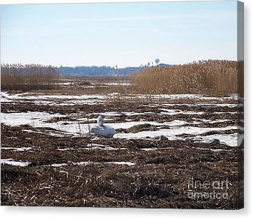 Snowy Owl In Winter Landscape Canvas Print by Eunice Miller