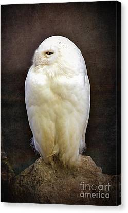 Snowy Owl Vintage  Canvas Print by Jane Rix