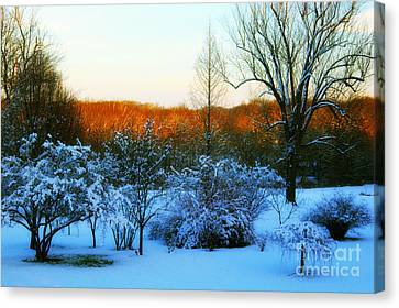Snowy Trees In December Twilight - Pearl S. Buck Homestead Canvas Print by Anna Lisa Yoder