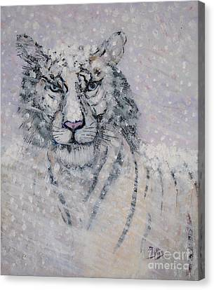 Snowy White Tiger Or Chairman Of The Board Canvas Print by Phyllis Kaltenbach