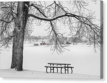 Snowy Winter Country Cottonwood Tree View Bwsc Canvas Print by James BO  Insogna