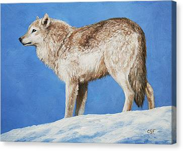 Snowy Wolf Canvas Print by Crista Forest