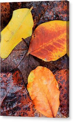 So Cal Autumn Canvas Print by Heidi Smith
