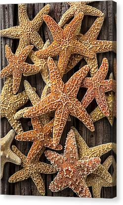 So Many Starfish Canvas Print by Garry Gay