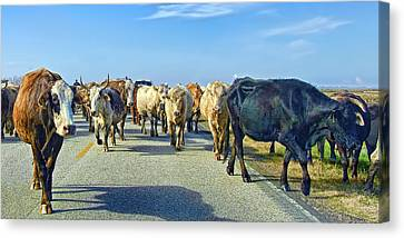 So This Is What Farm To Market Road Means - Panoramic Canvas Print by Gary Holmes