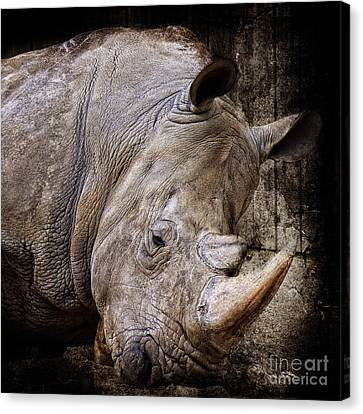 So Tired Rhino Canvas Print by Angela Doelling AD DESIGN Photo and PhotoArt