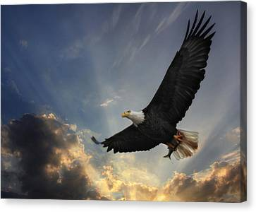 Soar To New Heights Canvas Print by Lori Deiter