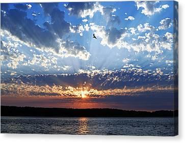 Soaring Sunset Canvas Print by Anthony Baatz