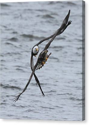 Soaring With Junior Canvas Print by Coby Cooper